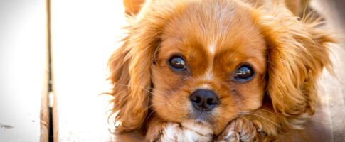 Image: Så mye koster hunden deg … egentlig