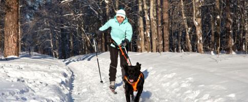 Image: - Også de små «veskehundene» blir raskt en trussel i skisporet