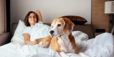 Image: Derfor bør du dele seng med hunden din