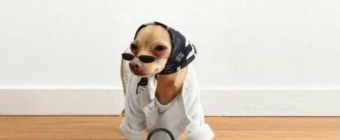 Image: – Man kler ikke opp en hund for hundens skyld